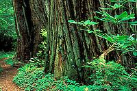 Redwood National Park, CA<br />