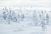 Cloudy day over snowy forest tundra, Saariselkä, Finland Ⓒ Davis Ulands   davisulands.com