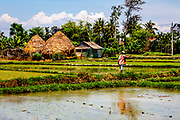 A man walking between rice paddys carrying a long pole in a rice field in Hoi An, Vietnam.