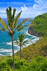 coconut palm trees and Pololu Beach, Pololu Valley, North Kohala, Big Island, Hawaii, USA, Pacific Ocean