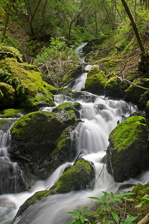 Cataract Falls, along Cataract Creek, near Mount Tamalpais, Marin County, California