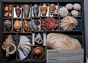 Collection of rare seashells and snail shells at the Natural History Museum, Vienna Austria