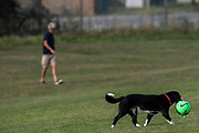 A man plays football with their black dog along the East Beach of Shoeburyness on Monday, July 26, 2021 - following the weekend of Floods due to torrential rains in England, United Kingdom. (VX Photo/ Vudi Xhymshiti)