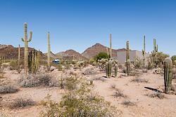 Organ Pipe Cactus NM, Arizone, USA