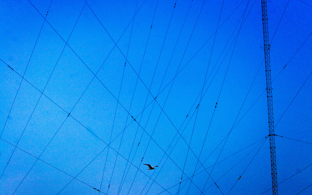 A bird seemingly flys through the myriad of wires supporting the radio towers at WOR-AM.