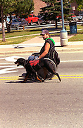 Disabled man age 35 riding in wheelchair and working dog on street.  Sault Ste. Marie Michigan USA