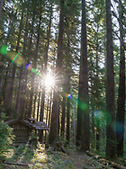 Trail and woods around Sol Duc Falls.