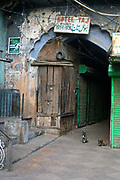 Two cats guard an alleyway in Old Delhi, India.