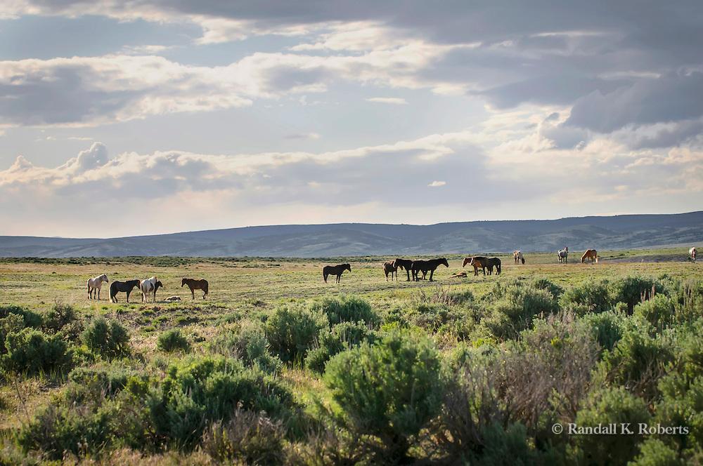 Wild horses of Sand Wash Basin Wild Horse Management Area, NW Colorado