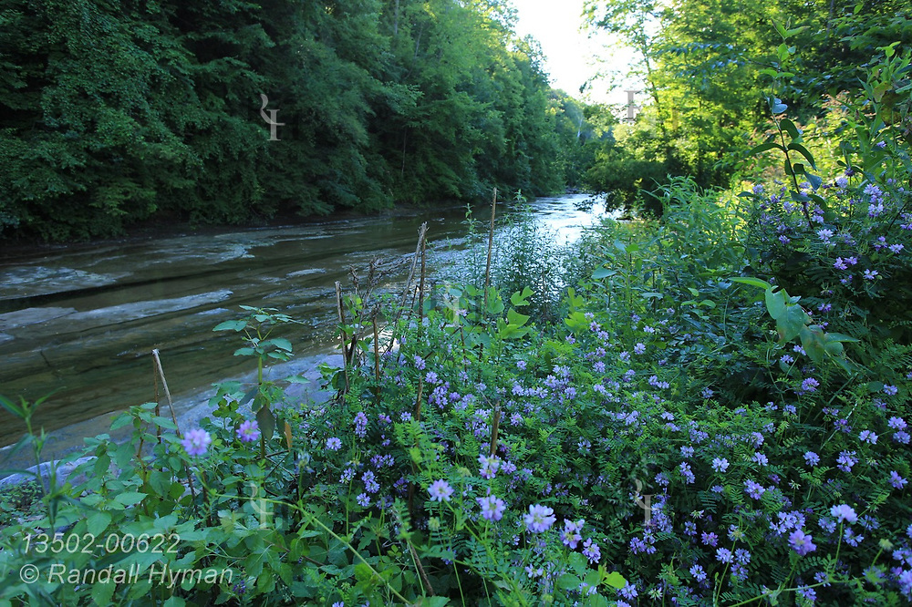 Flowers bedeck East Branch of Chagrin River near St. Hubert's Episcopal Church at sunset in Kirtland Hills outside Cleveland, Ohio