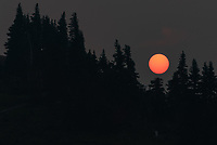 When the sun finally appeared over Hurricane Ridge, it was a dark red, before slowly brightening as it rose higher. It seemed like I was looking through a solar filter, but it was only heavy smoke.