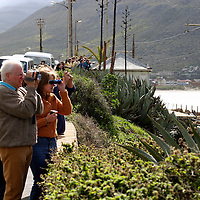 Africa, South Africa, Cape  Town. Roadside whale watching along the coast of False Bay south of Cape Town.