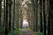Nederland, Leur, 25-12-2020  Op deze eerste kerstdag is het grijs weer. Mensen maken een wandeling door het bos. Foto: ANP/ Hollandse Hoogte/ Flip Franssen