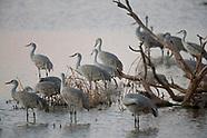 Whitewater Draw Wildlife Area-Arizona