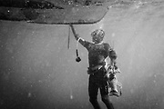 A diver coming up from a dive with his catch of lobsters