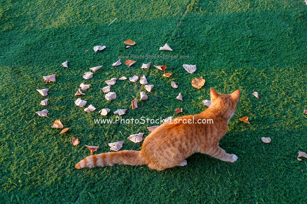 cat is curious by leafs in a spiral design on green grass