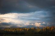 A brief moment of sunlight over forest top in dark and cloudy autumn day, near Limbaži, Latvia Ⓒ Davis Ulands   davisulands.com