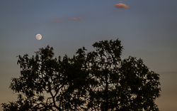 THEMENBILD - der Vollmond bei Sonnenuntergang über einem Baum, aufgenommen am 26. Juni 2018 in Pula, Kroatien // the full moon at sunset over a tree, Pula, Croatia on 2018/06/26. EXPA Pictures © 2018, PhotoCredit: EXPA/ JFK