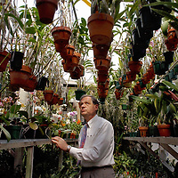 Keith Clayton looks at the Orchids in his greenhouse at his home Thursday, March 24, 2005. Clayton has been growing orchids for about 8 years.