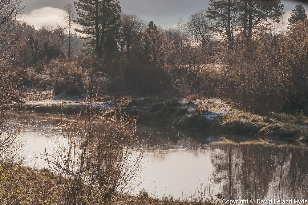 Misty Morning, Indian Creek, Genesee Valley, Willows, Cottonwoods, Tuft Grass, Mist, Fog, California Mountains, Ponderosa Pine, Shade Trees