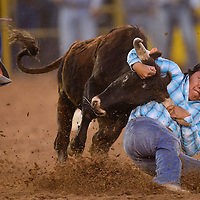 Steer wrestler Wacey Jodie digs his heels in to bring the steer down during the Navajo Nation Fair in Window Rock Thursday.