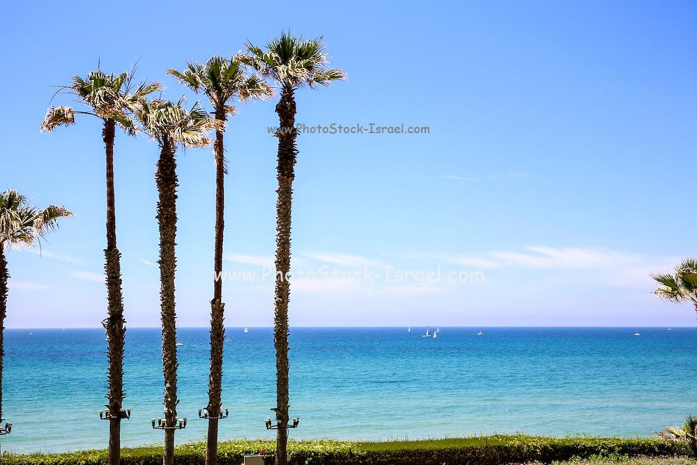 Palm trees on a beach. Photographed on the Mediterranean shore, Herzliya, Israel