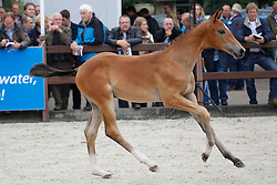 15 - Gerando<br /> KWPN Paardendagen 2011 - Ermelo 2011<br /> © Hippo Foto - Leanjo de Koster