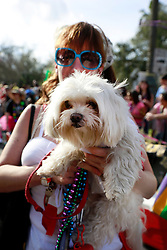 27 Jan 2013. New Orleans, Louisiana USA. .The Mystic Krewe of Barkus. Following the theme 'Here Comes Honey Bow Wow,' the parade parodies a popular media title as dogs and their owners parade through the French Quarter in one of the most irreverent parades of the season..Photo; Charlie Varley