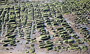 Seaweed covered green boulders on the beach at Hunstanton, Norfolk, England