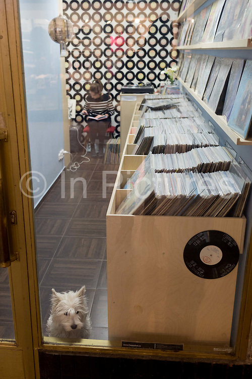 As its owner works at the back of the shop, a pet looks out from a record shop in Lucerna Gallery, on 19th March, 2018, in Prague, the Czech Republic.