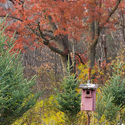 A birdhouse in a hayfield in Dunstable, Massachusetts.