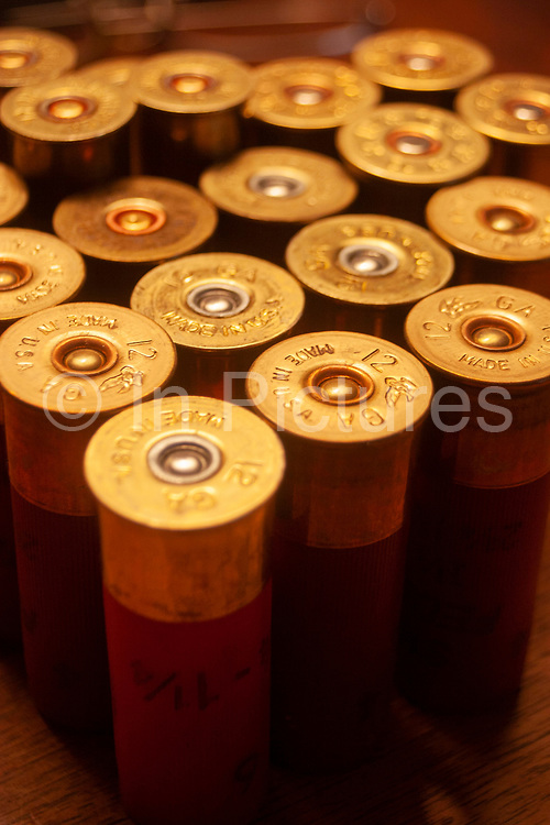 12 guage shotgun shells as used by the hunters during their annual duck and upland game bird hunting in Minot, North Dakota, United States. These cartridges range in guage size and with shot of different metal types. Mainly, and in this case, lead shot.
