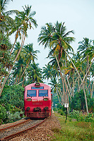 Sri Lanka, province du sud, Bentota, train reliant Colombo à Galle // Sri Lanka, West Coast, Bentota, train from Colombo to Galle