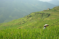 Rice fields in terrace following a hilly landscape in the area of Ping'an. Guangxi, China, Asia. A woman with her conic hat farms in the field.