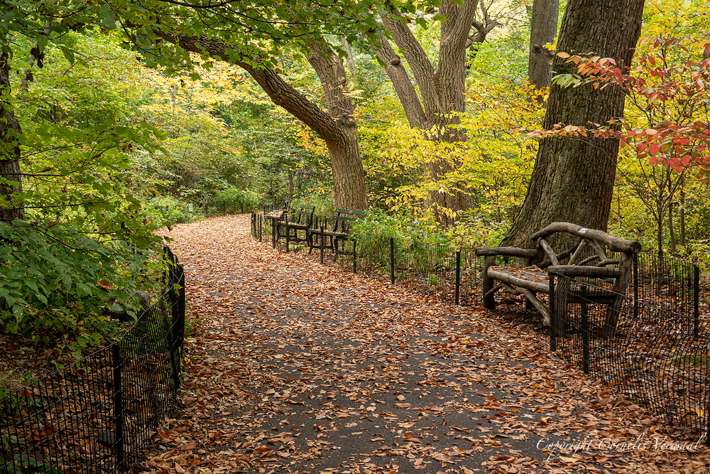 A rustic bench along a woodland path in The Ramble of Central Park