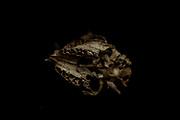 Isolation experiments in lockdown April-June 2020. Impala skull.