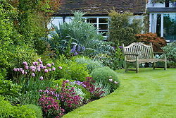 Curving border and lawn at Eastgrove Cottage in spring. Tulipa 'Bleu Aimable' with Erysimum 'Bloomsy Baby Purple' (wallflower) and Viola cornuta in the foreground. Wooden bench seat
