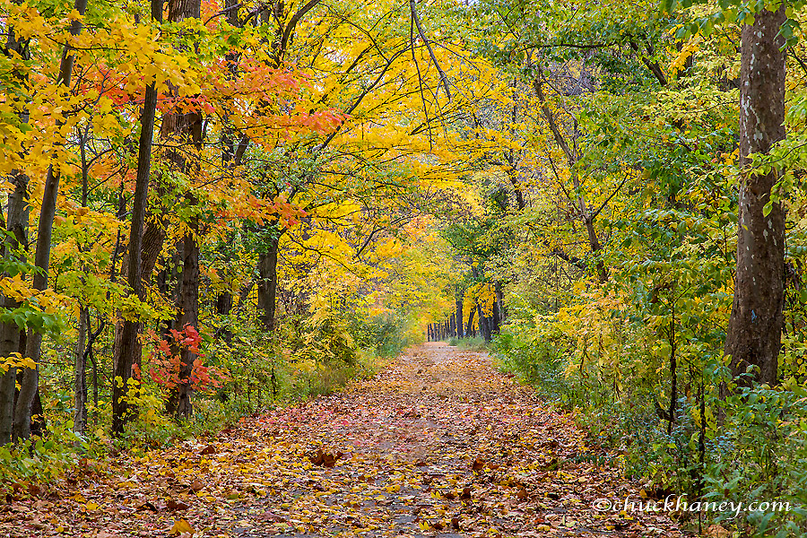 Autumn colors at Independence State Park in Definace, Ohio, USA
