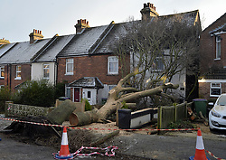 © Licensed to London News Pictures. 13/01/2017<br /> High winds bring a tree crashing down into a house in Stanley Road,Cheriton,Kent. Three homes had to be evacuated last night as a large tree fell on a house around 9pm blocking the doorways.<br /> Photo credit :Grant Falvey/LNP