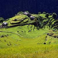Family farm and rice paddies climb steep hillsides in the foothill of Annapurna in Nepal.