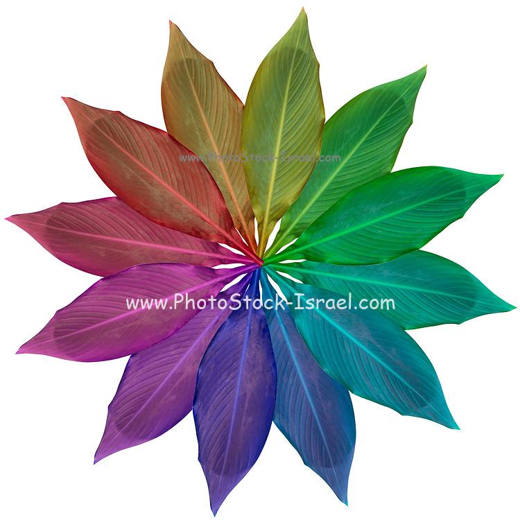 Digitally enhanced image of 12 rainbow coloured leaves arranged in a circular design
