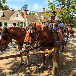 A Horse carriage driver readies to depart a stop in Colonial Williamsburg, VA.