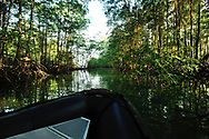 Mangrove trees frame the bow of a small inflatable boat in the waters of Golfo Dulce, Puntarenas, Costa Rica.