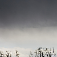 A spring storm hovers over bare cottonwood trees in the  Gallatin Valley, near Bozeman, Montana.  Behind are the Bridger Mountains.