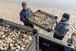 James Ward & Lynne Fox Loading Oyster Trays