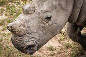 On the Rhino Front Line