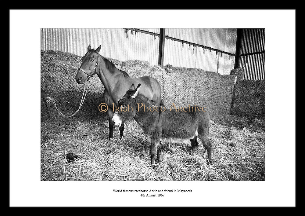This great shot of the world famous race horse Arkle by Lensmen Photographic Agency is the perfect anniversary gift idea for someone that likes Irish horse racing.