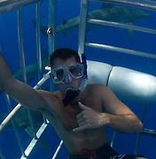 Galapagos shark, cage dive, Haleiwa, Oahu, Hawaii