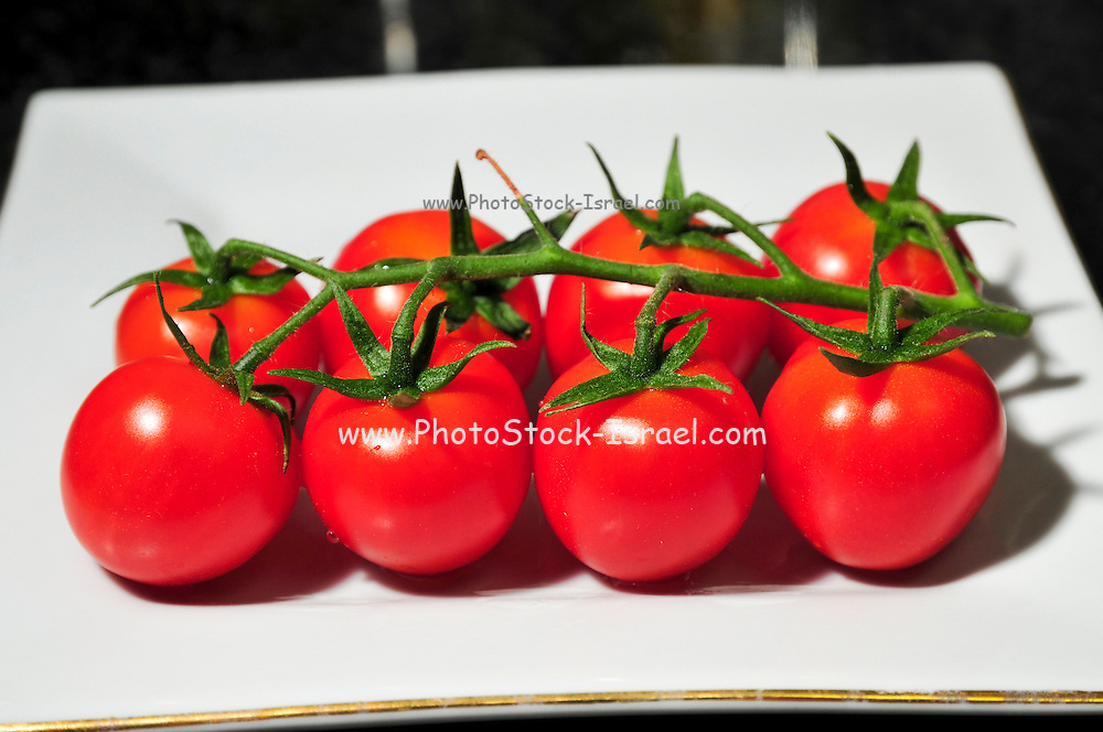 Cocktail tomatoes on white plate. Cultivated for their size, colour and durability