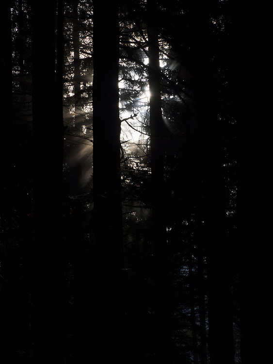 Silhouette of trees during sunset in Black Forest, Baden-Wurttemberg, Germany